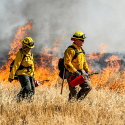 Picture for category Wildland Gear